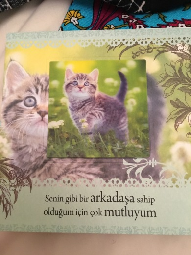 Card adorned with kitten